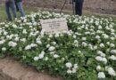 Nel trentennale commemorate le 140 vittime Moby Prince